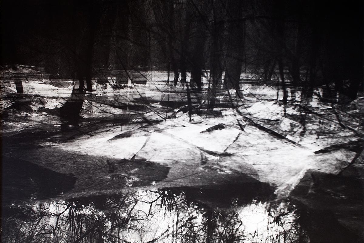 Eisplatten im Wald