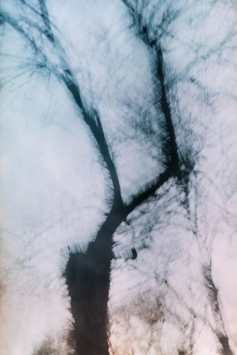 verschwommen Bild eines kahlen Baumes