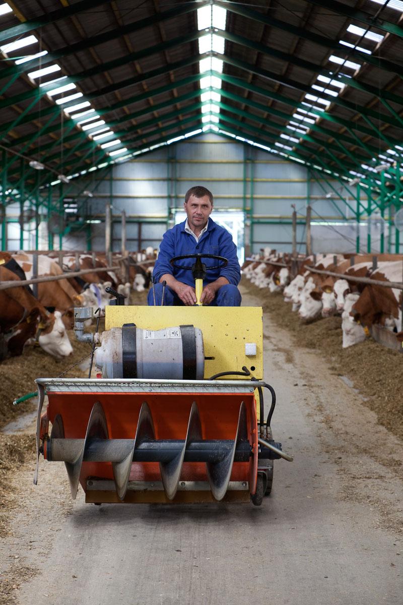 mann auf kleintraktor in Kuhstall in biogasanlage