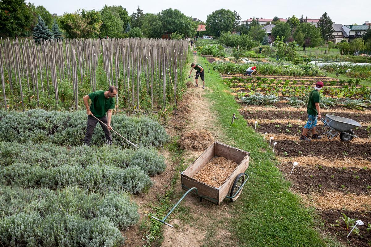 Gärtner pflegen Beete im Ökogarten Bio-Gärtnerei in Mödling