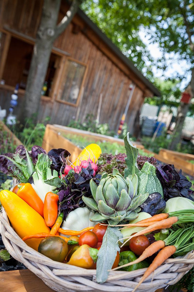 frisches Gemüse aus der Ökogarten Bio-Gärtnerei in Mödling