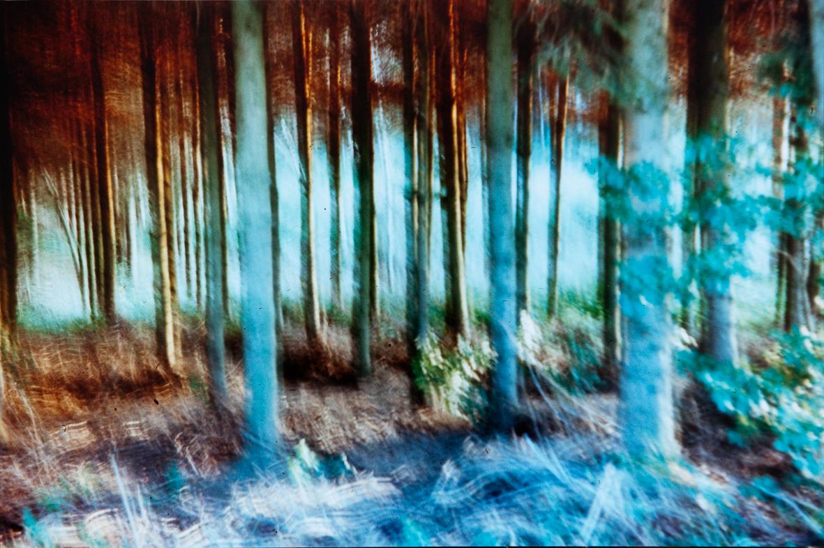 grün-braune Baumstämme in einem Wald
